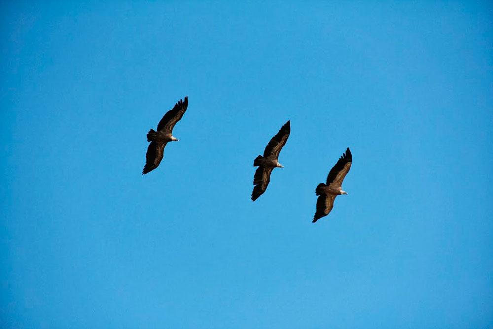 Birding Segovia